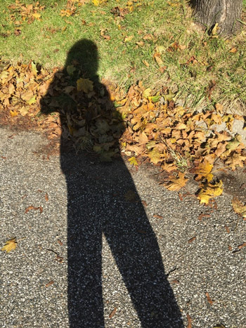 Shadow and Leaves photo