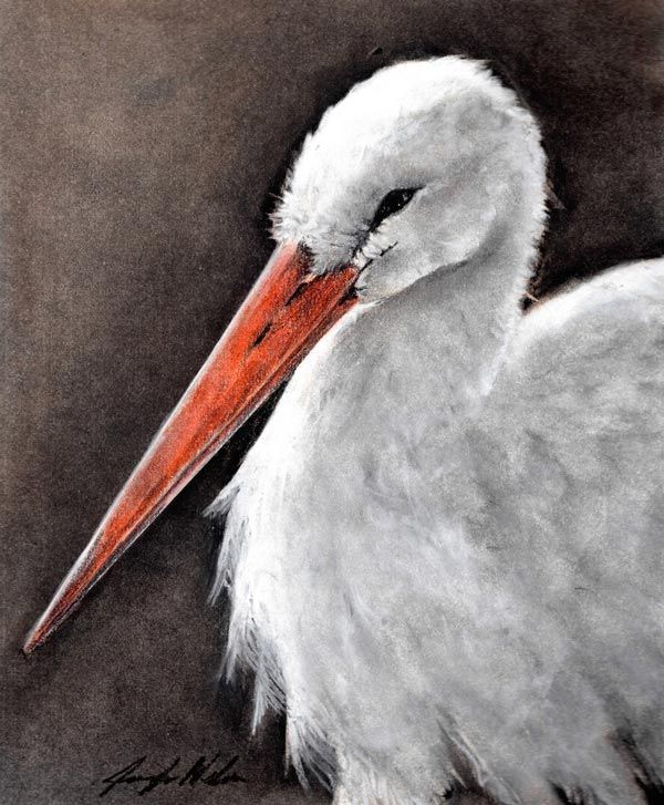 White Stork painting by Jennifer Nelson