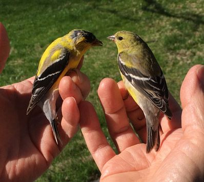 Having Birds in The Bush - is worth two in the hand!